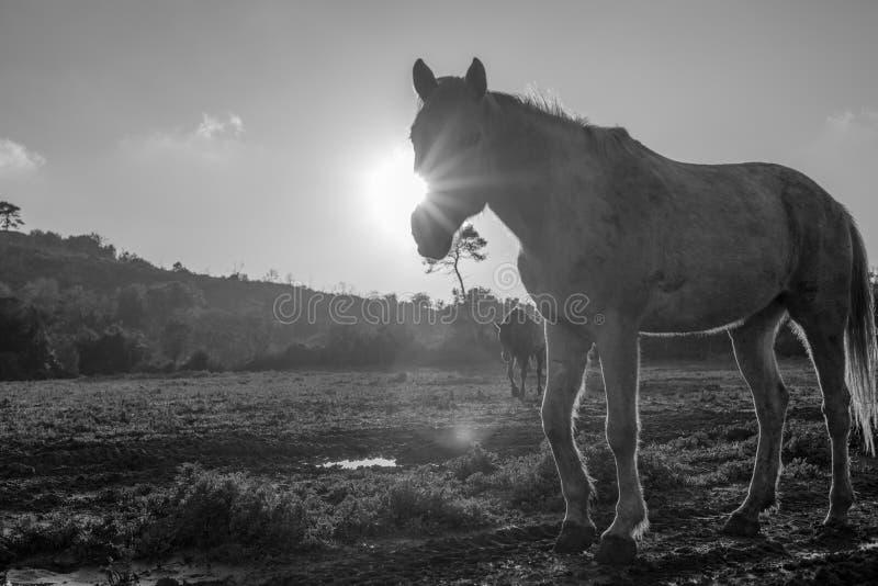 Paardportret tegen de zon royalty-vrije stock afbeelding