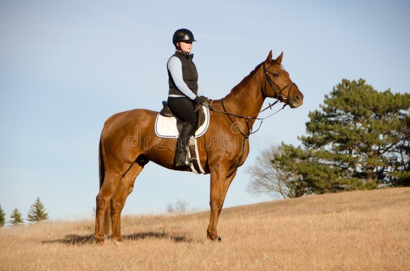 Paardrijden op gebied stock fotografie