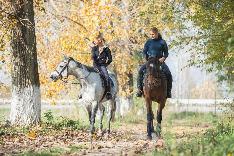 Paardrit royalty-vrije stock afbeelding