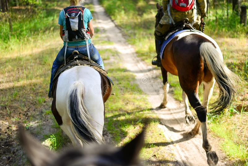 Paardrit langs de sleep onder bossen en gras royalty-vrije stock foto's