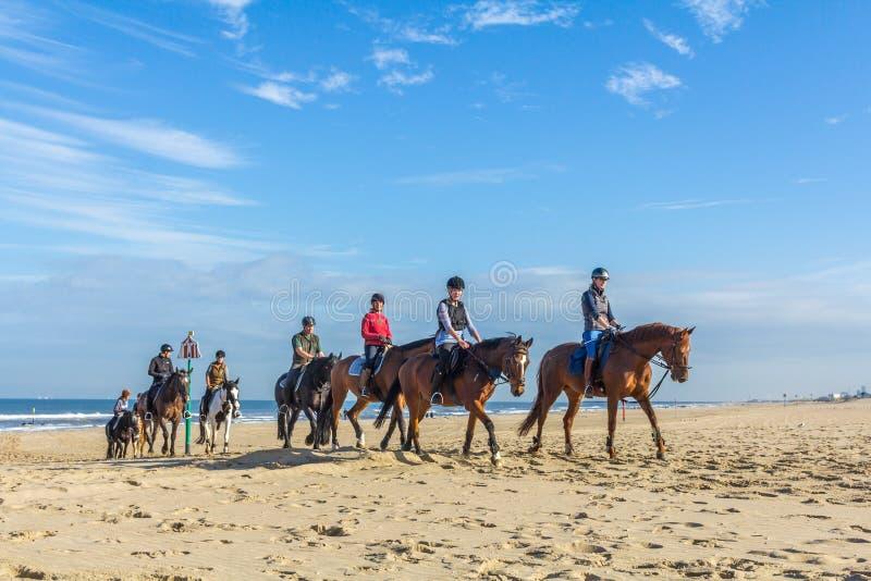 paardruiters op het strand op mooie zonnige dag stock foto's