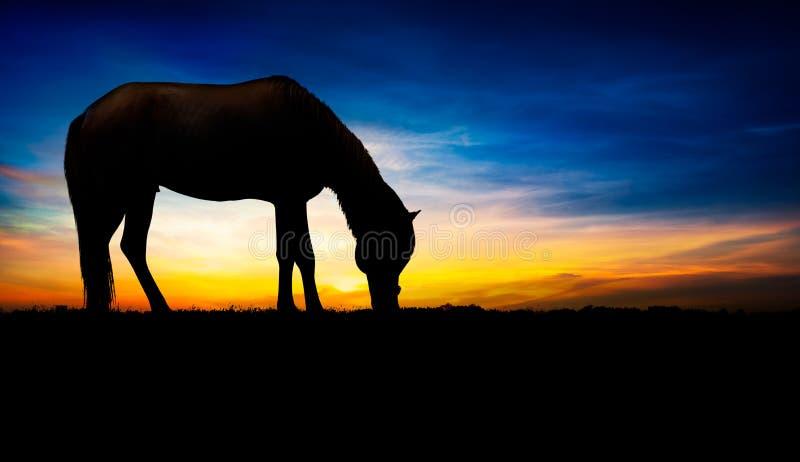 Paardsilhouet royalty-vrije stock foto's