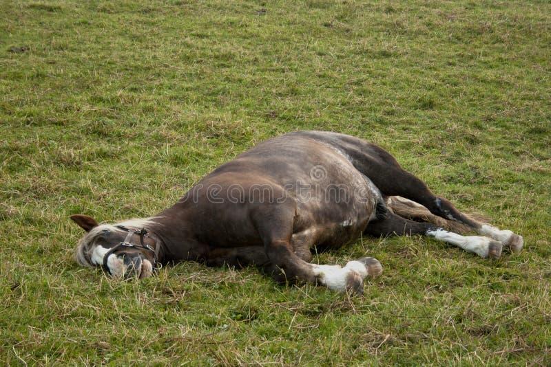 Paardslaap buiten op weiland royalty-vrije stock foto's