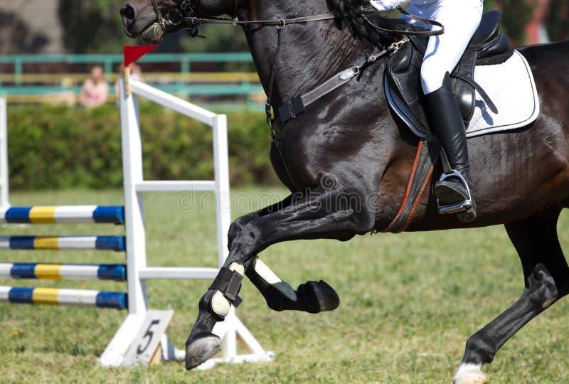 Paardsprong In De Concurrentie Stock Foto