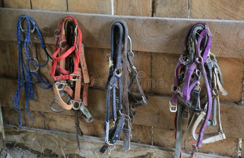 Paardteugel en Teugels royalty-vrije stock foto's
