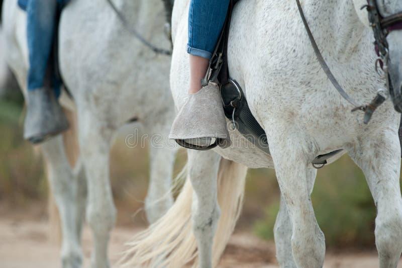 Paardtoerisme stock foto