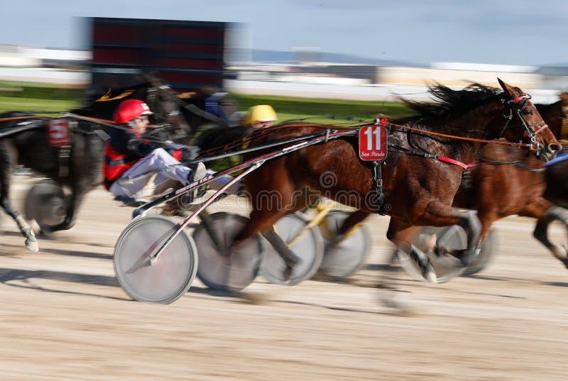 Paarduitrusting die in panning van de palmade Mallorca renbaan rennen stock afbeeldingen