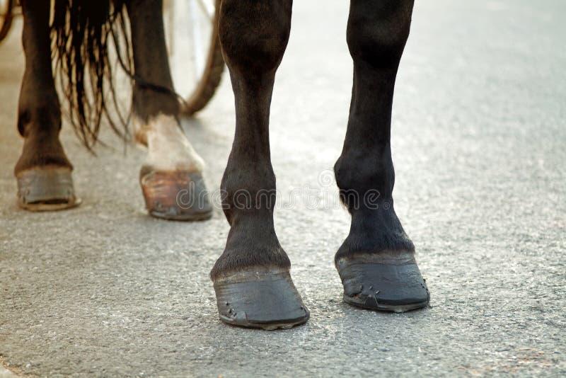 Paardvoeten met hoofs en hoeven tegen de wielen van c stock foto