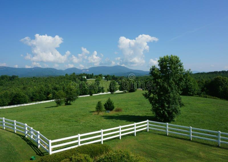 Paardweiland in Zuid-Carolina royalty-vrije stock fotografie