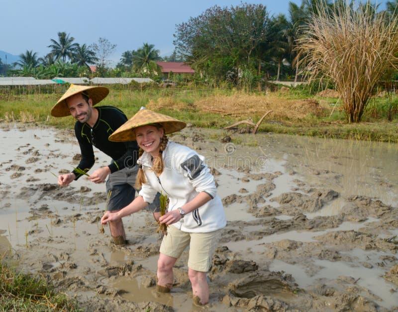 Paare auf dem Reisgebiet in Laos lizenzfreies stockbild