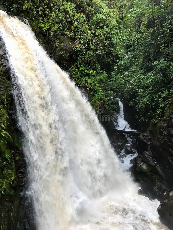 Paare der großen Wasserfälle im Dschungel stockfotografie