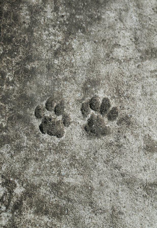 Paare der Tierdruckkatzenspur froren auf einem konkreten Weg im Th ein lizenzfreies stockbild