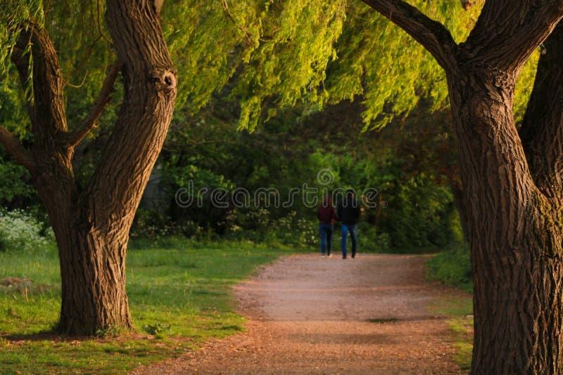 Paare, die in einen schönen Waldweg gehen lizenzfreie stockbilder