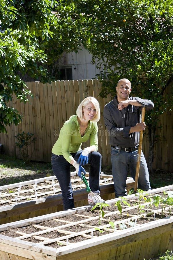 Paare, die an Gemüsegarten im Hinterhof arbeiten stockbild