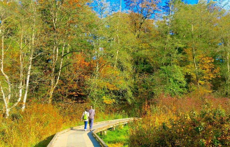 Paare, die hinunter die Bahn umgeben von schönem Autumn Trees gehen stockfoto