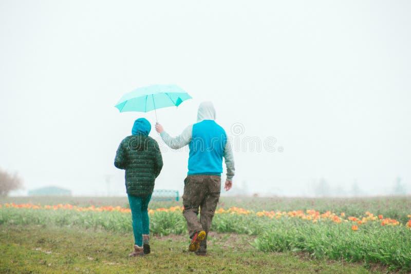 Paare, die nahe einem Tulpenfeld mit dem Mann hält einen Regenschirm über dem Kopf der Frau stehen stockfotos