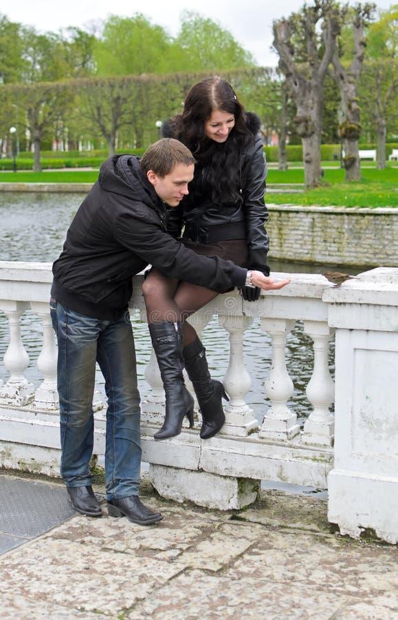 Paare, die versuchen, Spatzen zu speisen stockfoto