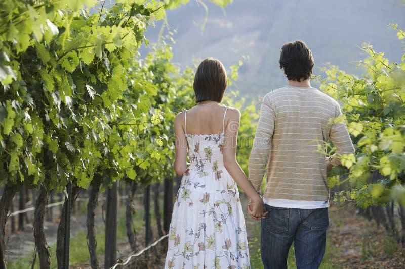 Paare, die in Weinberg gehen lizenzfreies stockfoto