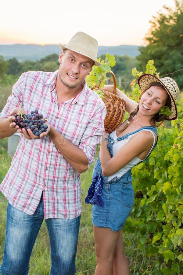 Paare an einer Rebanlage ein Korb stockfotos