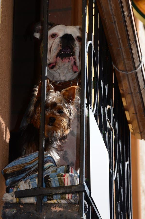 Paare Hundedes überwachens
