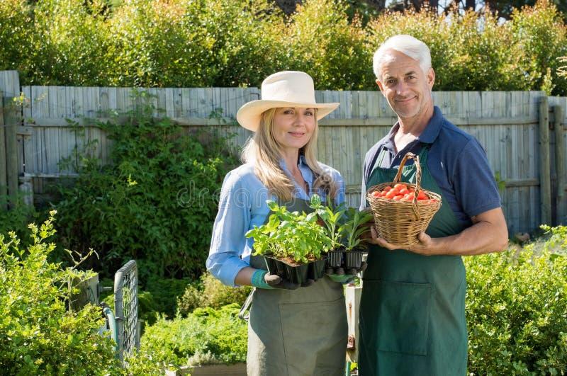 Paare im Gemüsegarten lizenzfreies stockbild