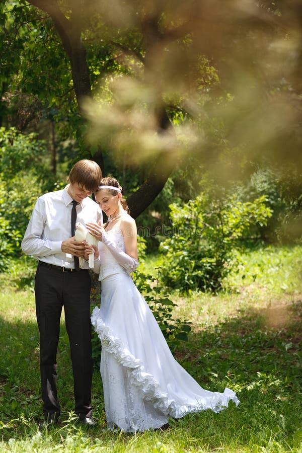 Paare mit Tauben stockfotografie