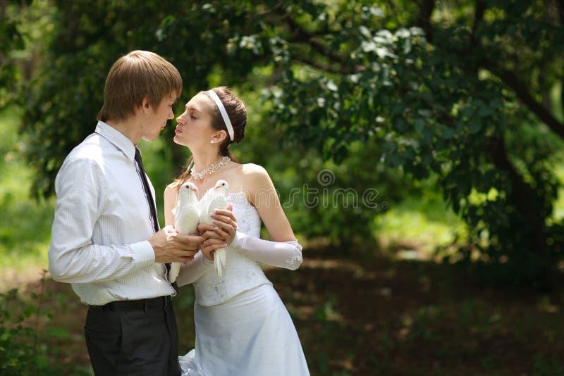 Paare mit Tauben stockfoto