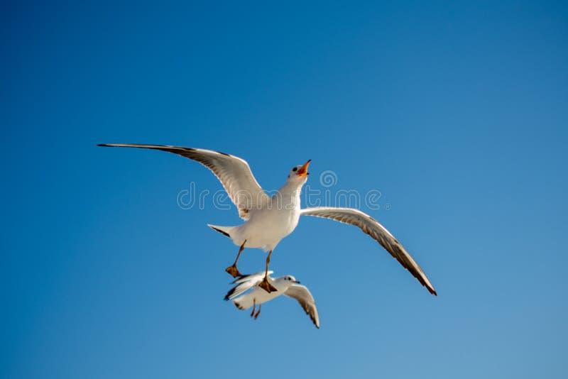 Paare Seem?wen, die in den Himmel fliegen lizenzfreies stockfoto
