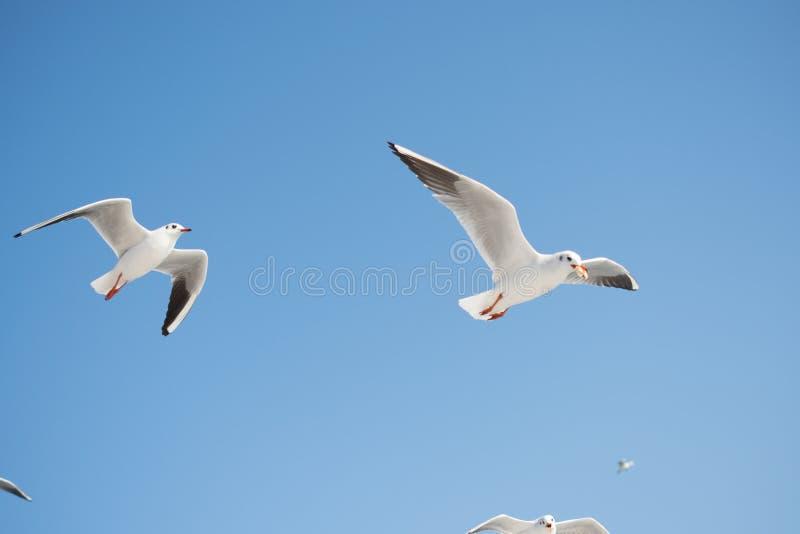 Paare Seem?wen, die in den Himmel fliegen lizenzfreie stockbilder