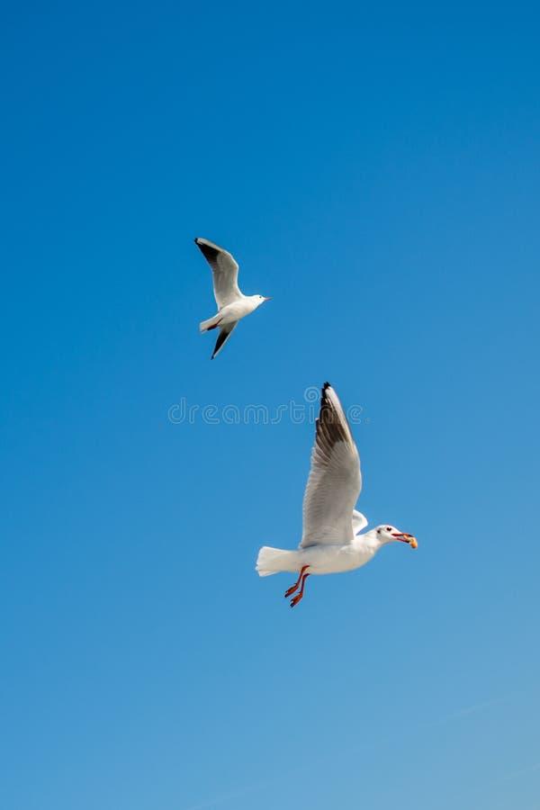 Paare Seem?wen, die in den Himmel fliegen stockfoto