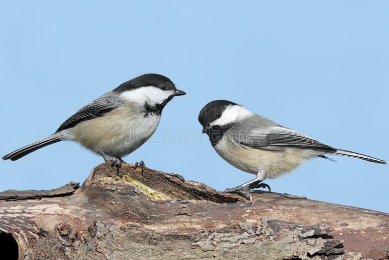 Paare Vögel auf einem Protokoll stockbilder