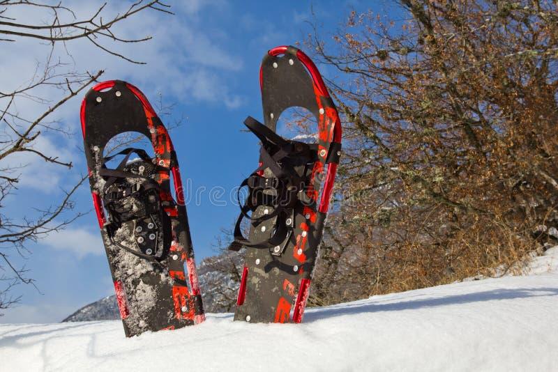 Paare von Snowshoe stockbild