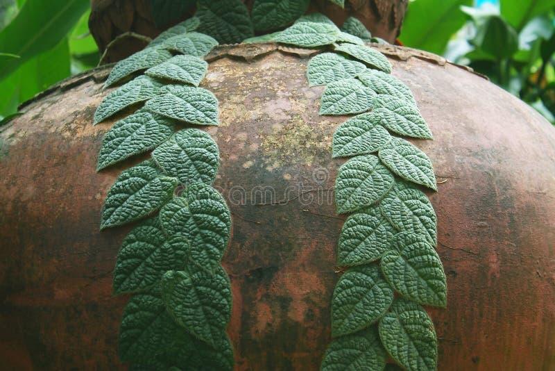 Paarlijn met groene bladeren op grote waterkruik stock afbeeldingen