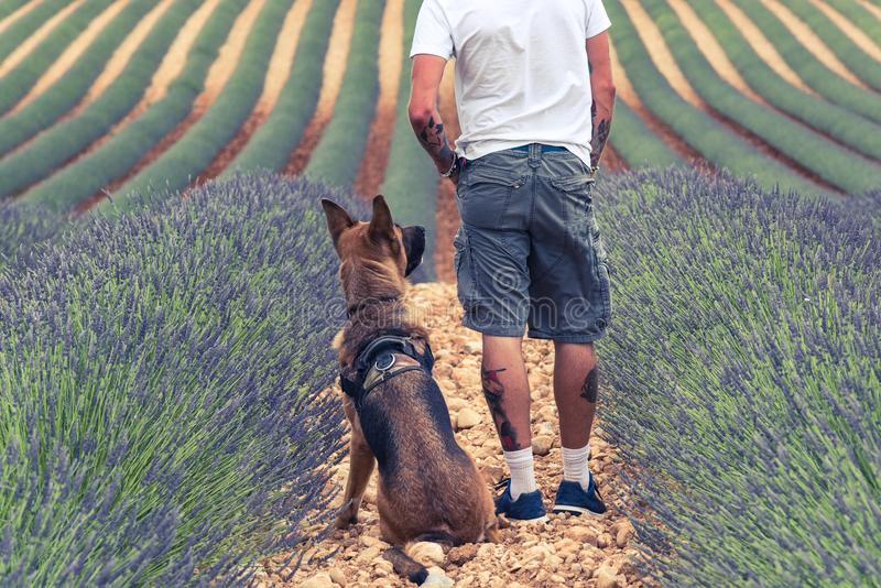 Paarreisende auf den Lavendelgebieten in Provence lizenzfreies stockfoto