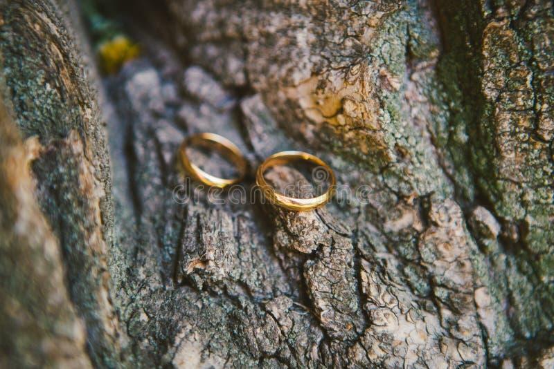 Paartrouwringen op oude houten textuur, de schors van de boom stock foto