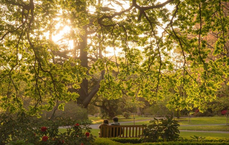 Paarzitting onder de grote boom met mooi milieu in de Botanische tuinen van Christchurch, Nieuw Zeeland stock fotografie