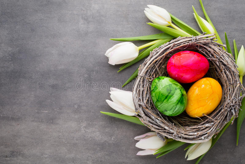 Paaseieren in de nest und tulp Grijze achtergrond stock fotografie