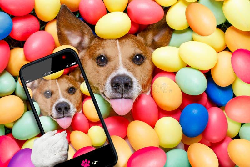 Paashaashond met eieren selfie royalty-vrije stock afbeeldingen