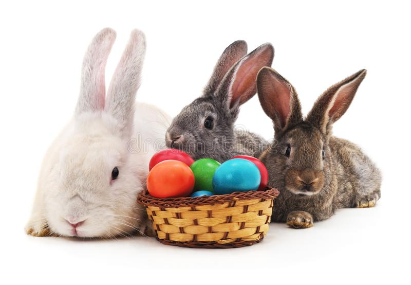 Paashazen met gekleurde eieren stock afbeeldingen