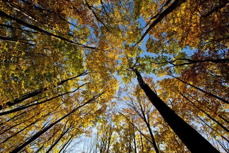 Pabellón de árbol. imágenes de archivo libres de regalías
