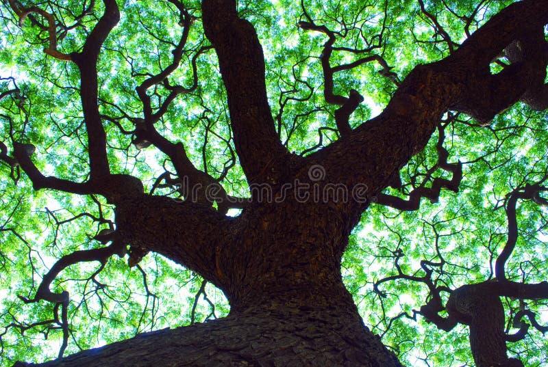 Pabellón de árbol fotos de archivo libres de regalías
