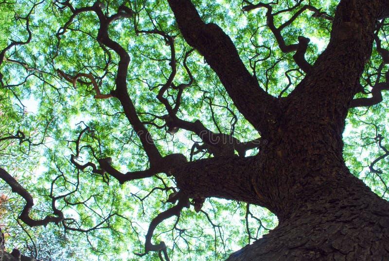 Pabellón de árbol imagen de archivo libre de regalías