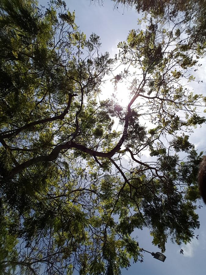 Pabellón de árbol foto de archivo libre de regalías