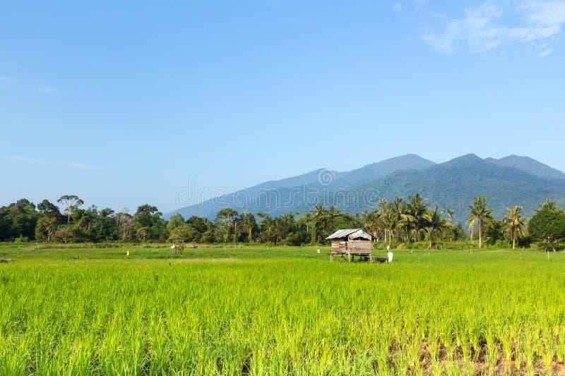Pabellón de madera en campo de arroz en Sematan foto de archivo libre de regalías
