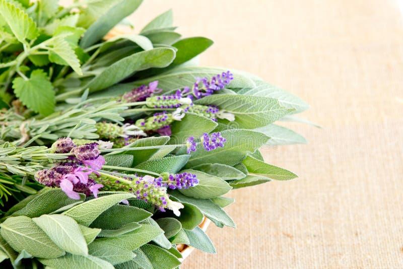 Pacchi freschi delle erbe sul fondo beige della tela da imballaggio - i rosmarini, laven fotografie stock