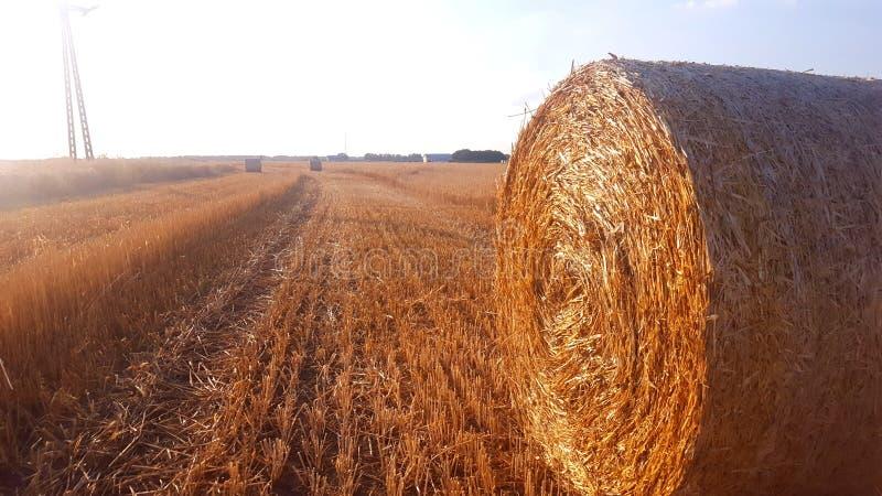 Pacchi rotondi di erba asciutta nel campo fotografia stock