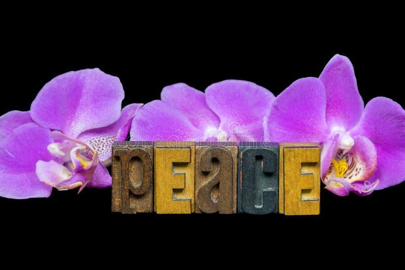 Pace dell'orchidea con scritto tipografico di legno composto immagini stock libere da diritti