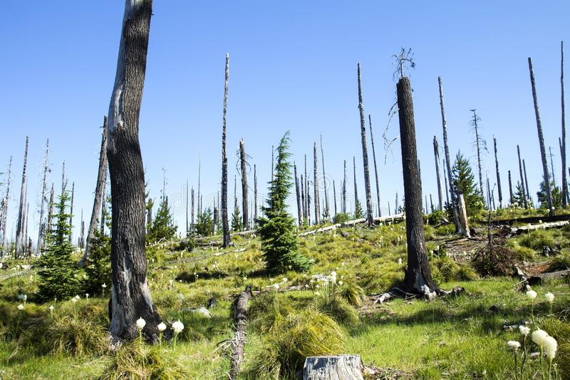 Pacfic Crest Hiking Trail near Hoodoo, Oregon royalty free stock photos