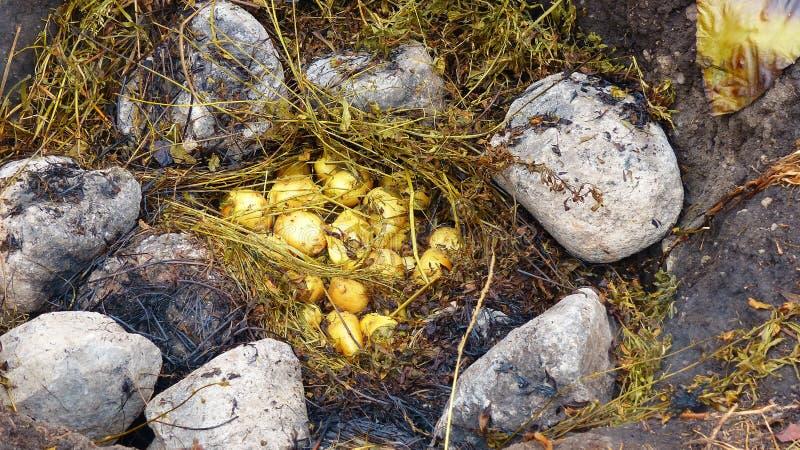 Pachamanca is een voorouderlijk het koken ondergronds procédé op verwarmde stenen, Ecuador royalty-vrije stock afbeeldingen