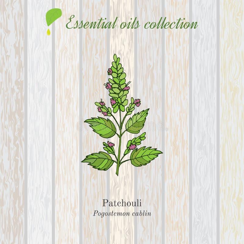 Pachulí, etiqueta del aceite esencial, planta aromática ilustración del vector